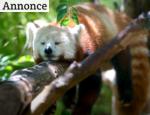 et dyr sover på en gren